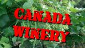 カナダのワイナリーでキャッシュジョブに挑戦